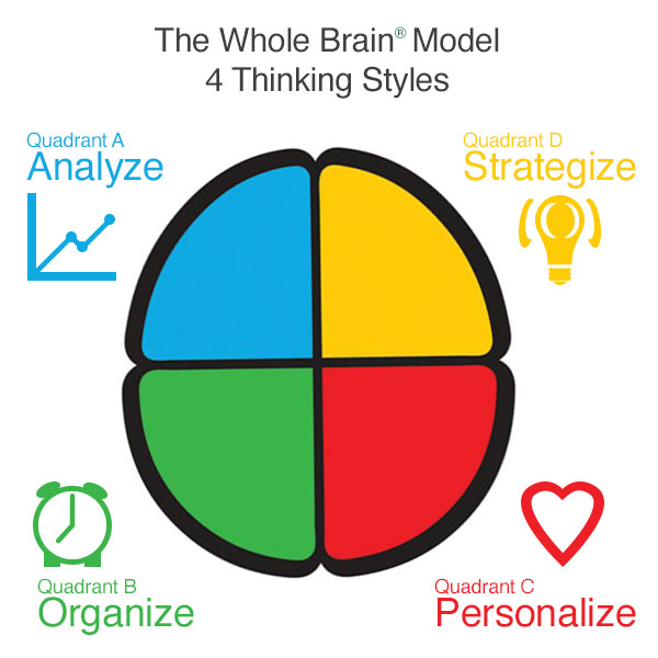 the whole brain model separated into quadrants